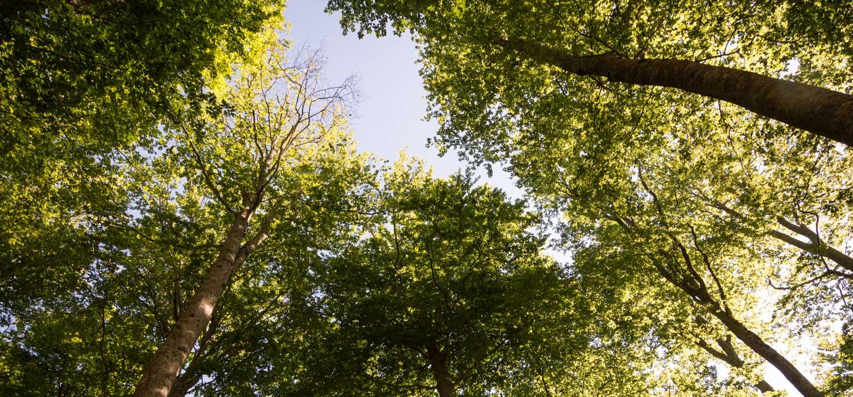 Bosco di faggi Monte Amiata